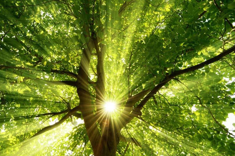 TEQ-SPRAY Energie-Einsparungen für die Umwelt